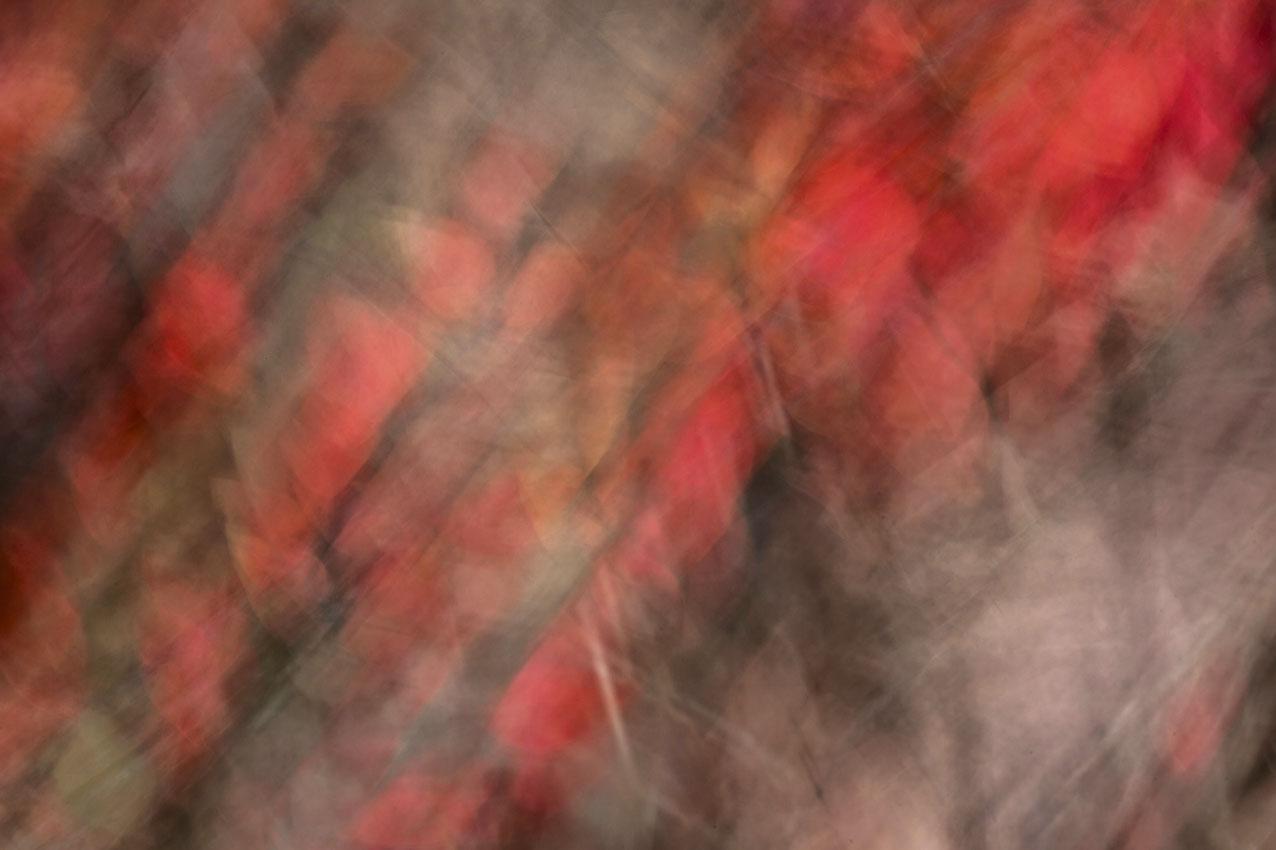 Foto Natur Blätter abstrakt